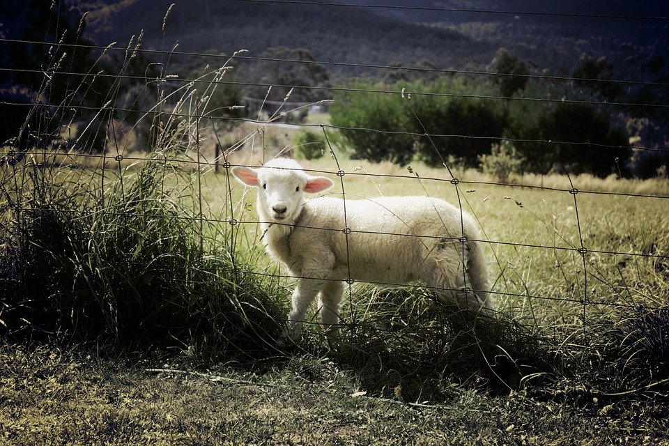 奈落の羊のネタバレ感想